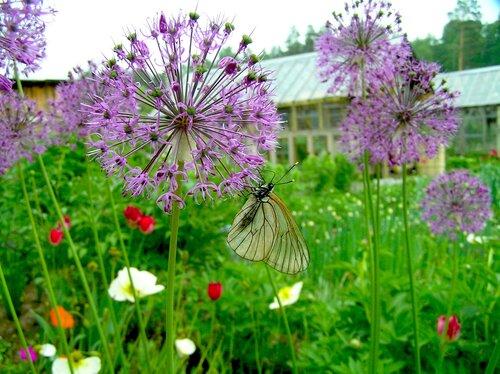 На даче есть цветы и бабочки