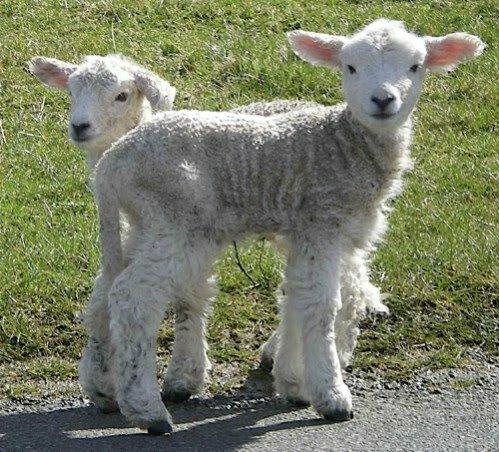 cute animal twins