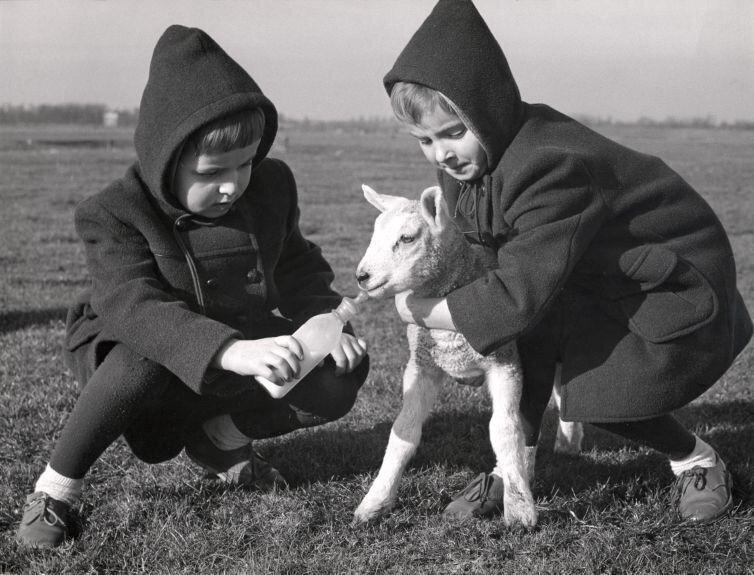 Twins feeding a little lamb 1960