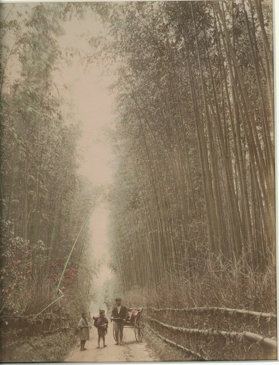 Киото. Бамбуковая роща