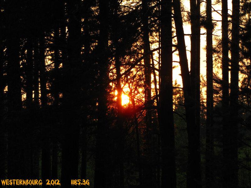 1185.36 Вечернее солнце. 5 июля 2012 г.