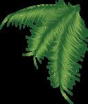 пальма4.png