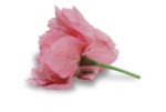 natali_design_day_flower10-sh.png