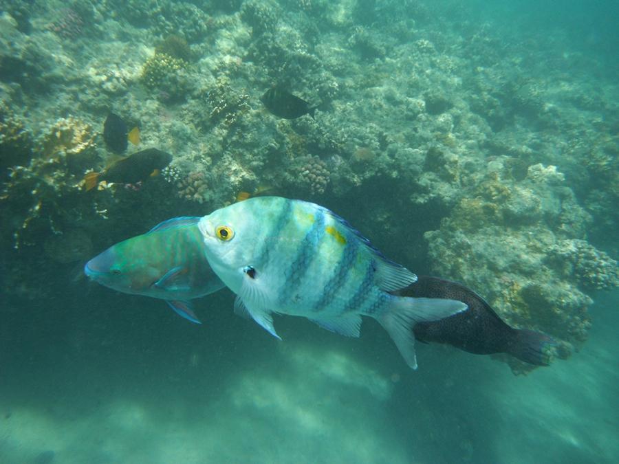 Обитатели красного моря фото описание
