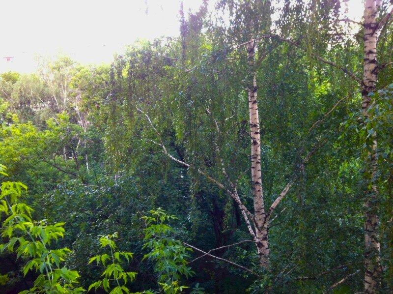 Июнь. Холодное лето 2012