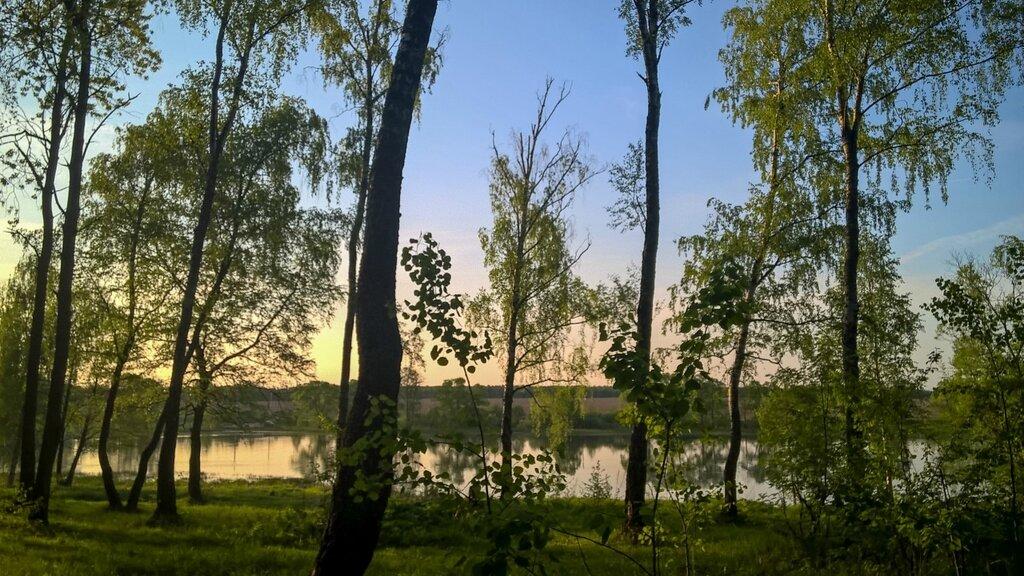 Деревья на берегу