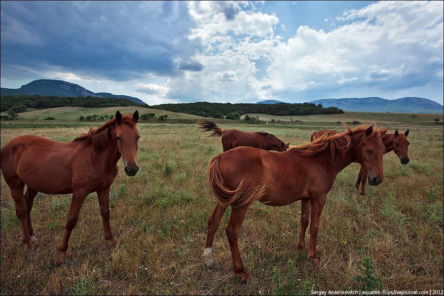 Лошади и небо