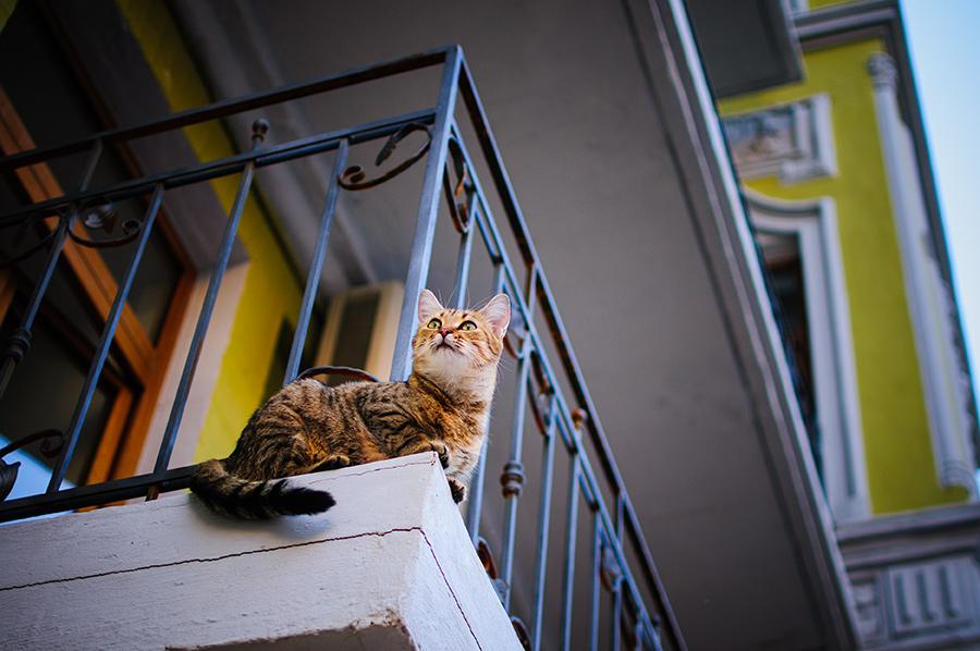Андреевский кот