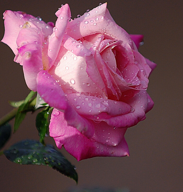 Источая нежный,сладкий запах...Цветы