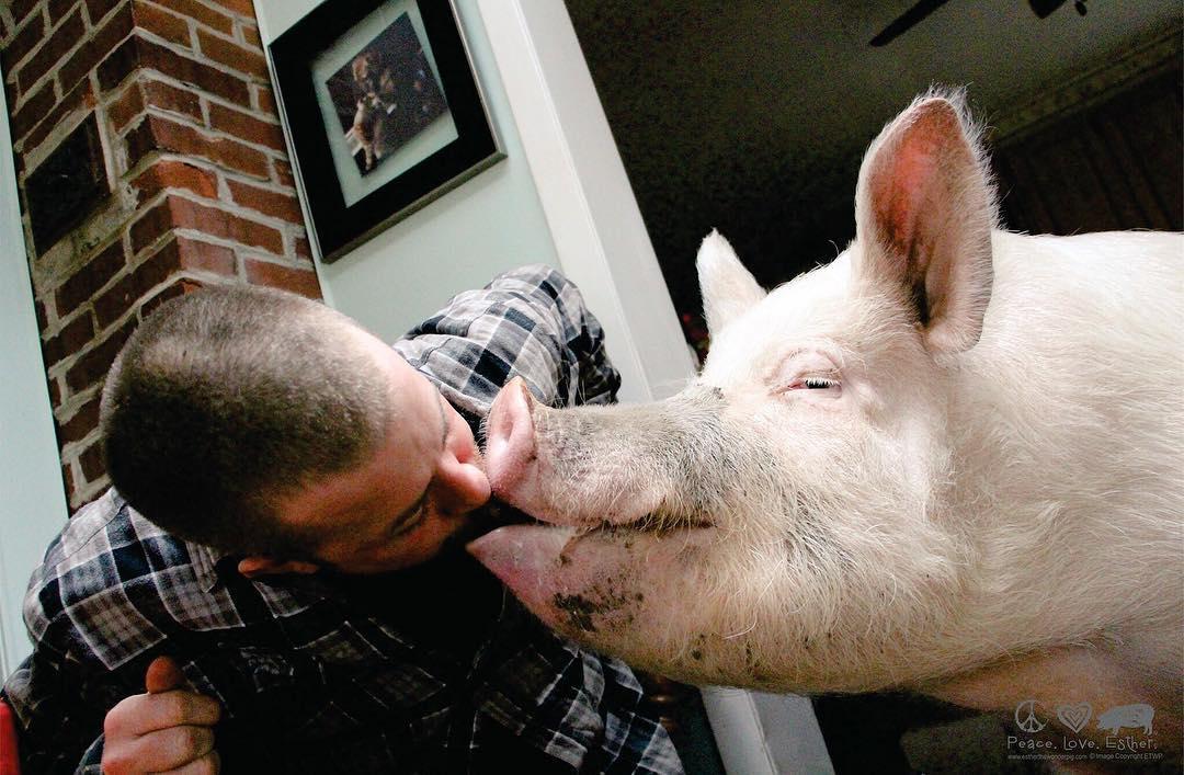 станет парень свинья картинки можно использовать для