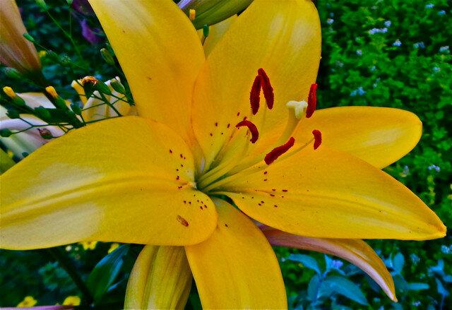 Цветы нашего сада
