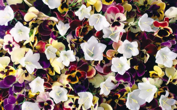 Квіткові шпалери