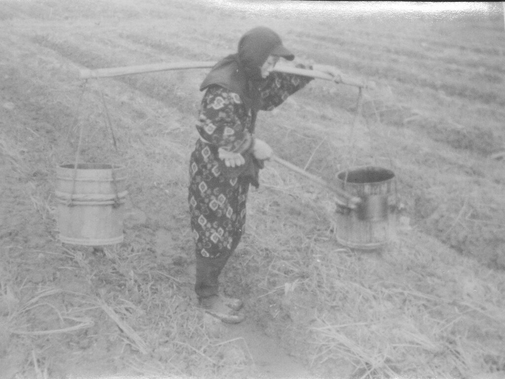 Farmer fertilizing plants, Dec 1945