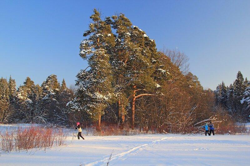 Лыжня, лыжники, снег и сосны в закатных лучах в Заречном парке города Кирова