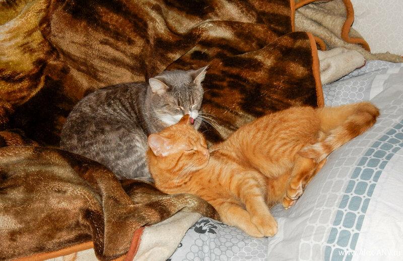 Иногда Масяня решает, что кот не слишком тщательно вымыт...