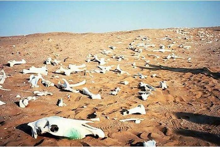 Глобальные трагедии в истории: 5 самых массовых вымираний животных
