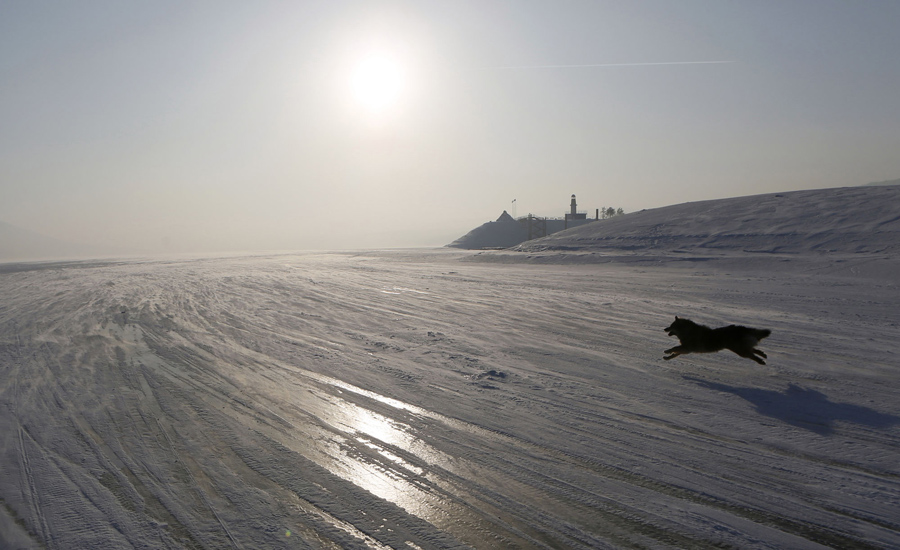 A dog runs on the frozen surface of the Yenisei River in Taiga, with the air temperature at about mi