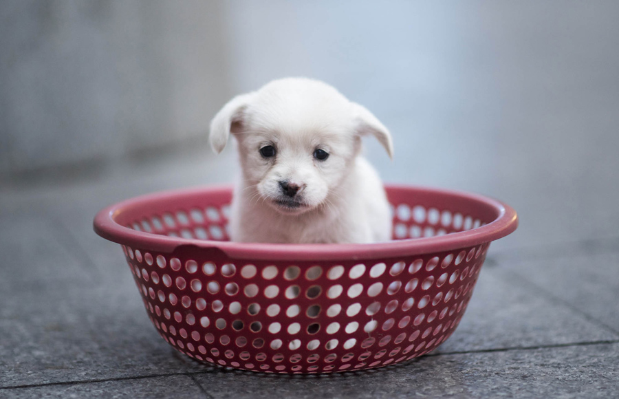 A puppy sits in a plastic strainer, waiting to be sold by its owner, in front of a subway station in