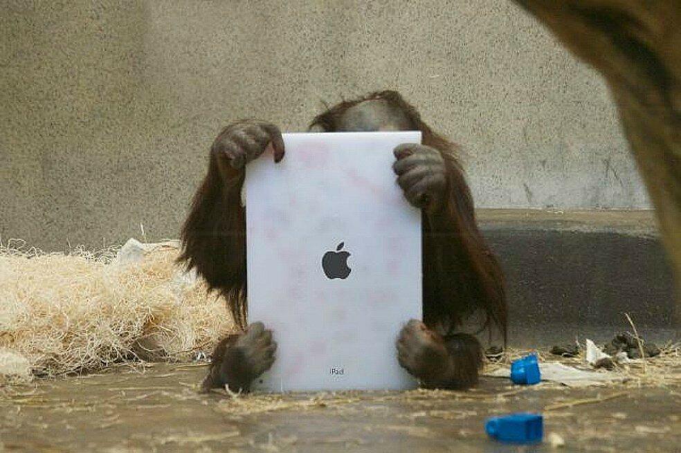 обезьяна с айпадом.jpg
