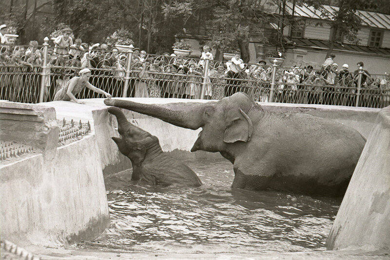 418228 В зоопарке нач. 1950-х гг..jpg