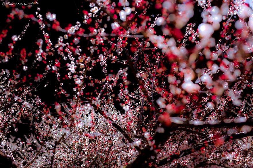 Японская весна в фотографиях Хиденобу Сузуки