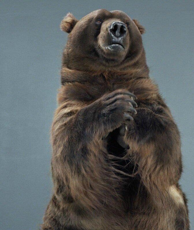 Джилл Гринберг   Медвежьи портреты