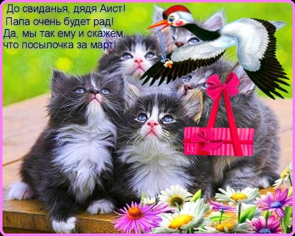 Поздравления с всемирным днем кошек 99