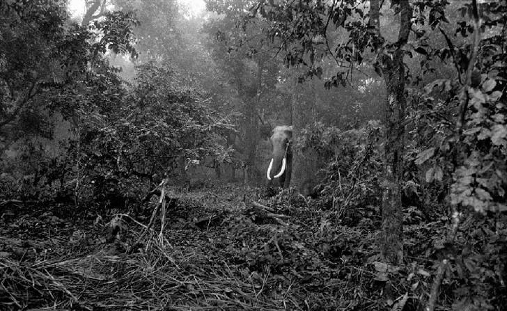 3. Дикий слон в национальном парке «Читван» на Шри-Ланке.