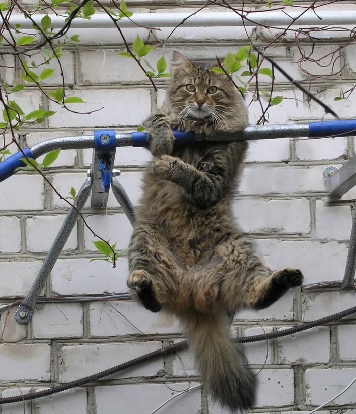 Настоящие коты даже на турнике остаются фотогеничными.