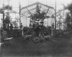 Зимний сад в доме графов Левашовых на Фонтанке