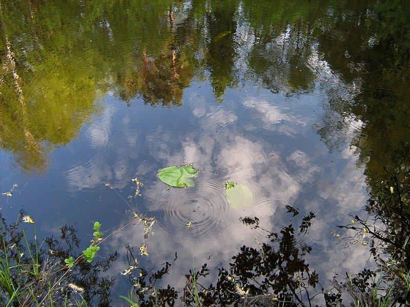 Акварельные отражения сосново-берёзового леса в тёмной воде пруда