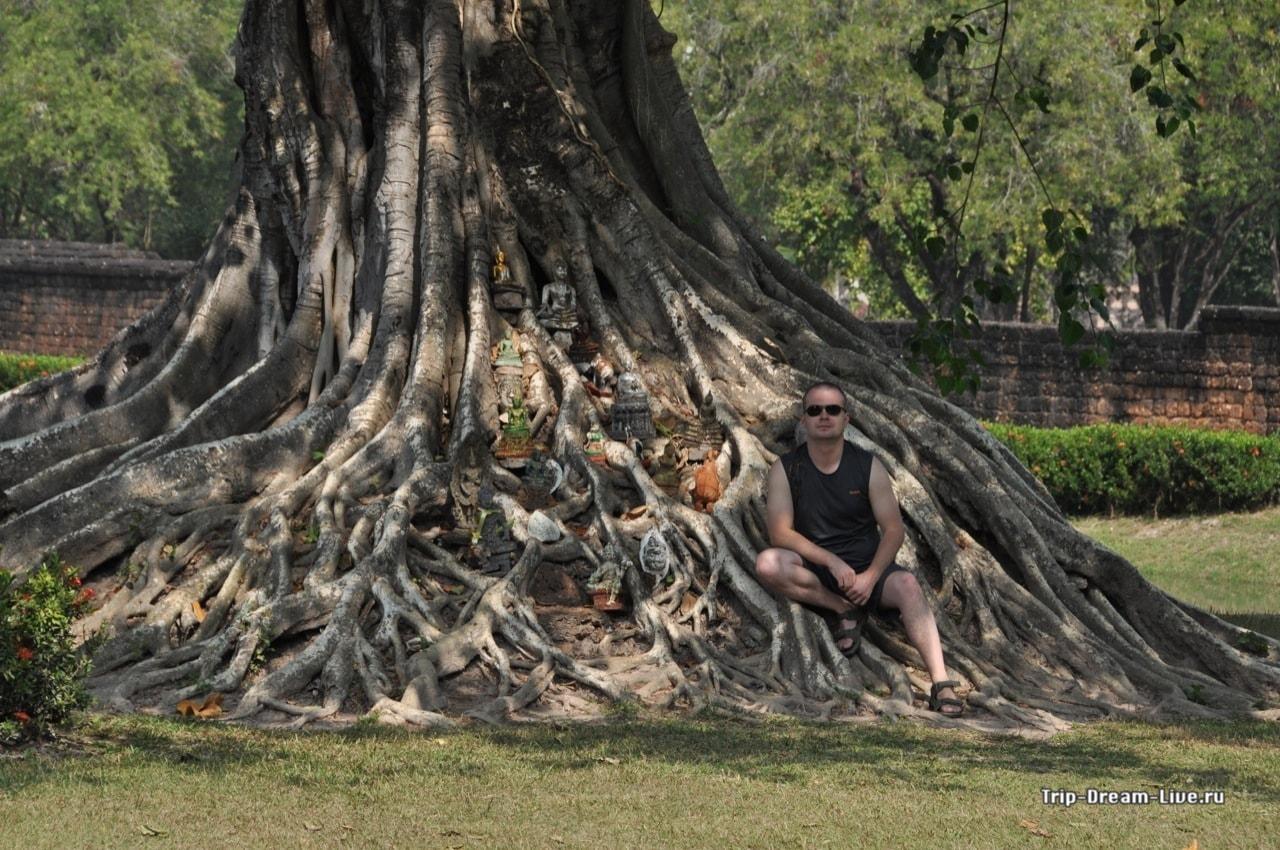 Под баньяном в Суккотае Таиланд