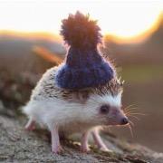 Ежик в шапке