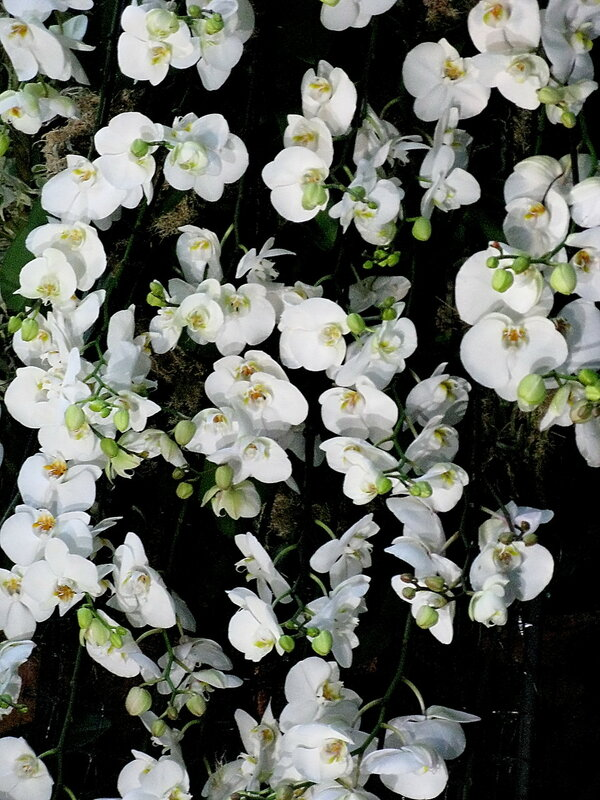 Орхидеи