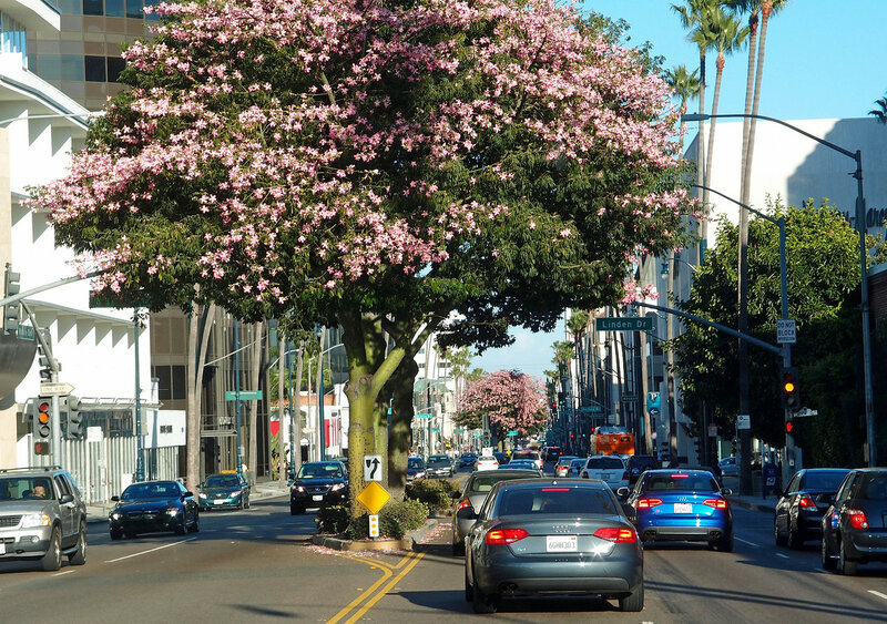 california_2011_18.jpg