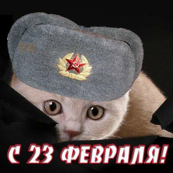 картинки кошки с днем защитника отечества