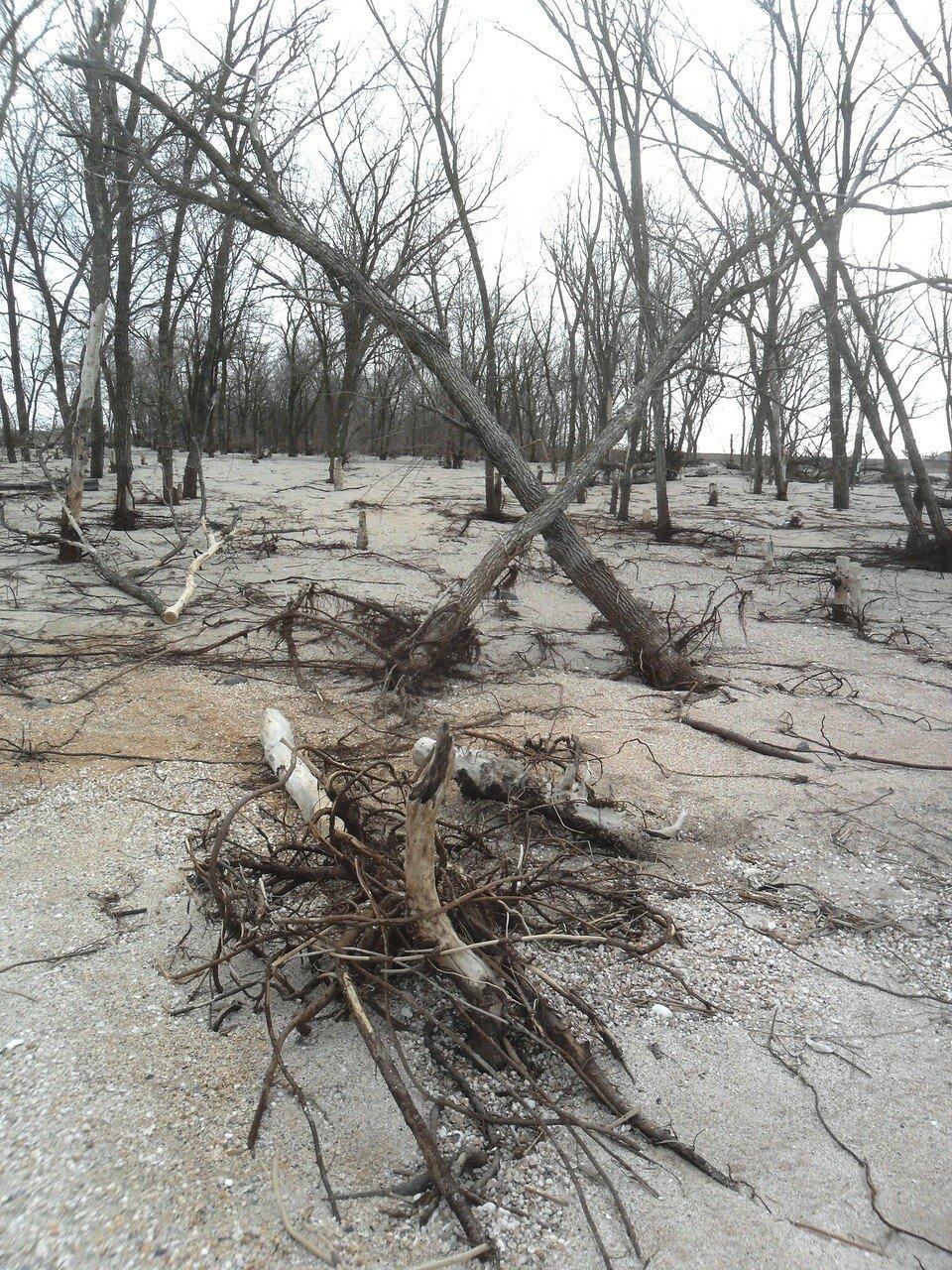 Сочетание зимнее, древесно-песчаное ... SAM_5606.JPG