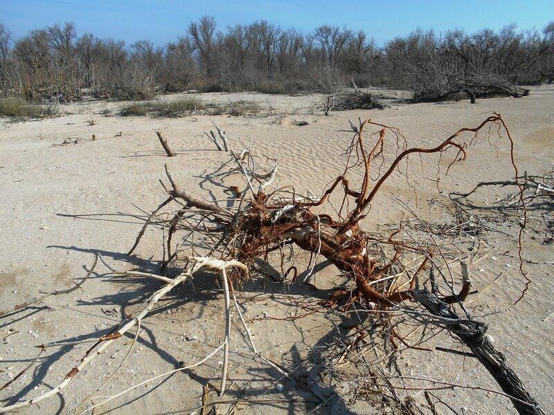 На песках, в марте ... DSCN4432.JPG