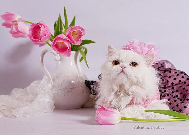 Кошка с цветами открытка с днем рождения 20