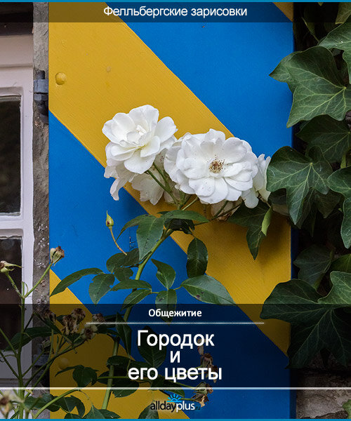 Фелльбергские зарисовки. Городок и его цветы.