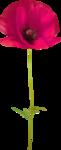 NLD Poppy (2).png