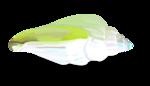 White lil ships el31sh.png