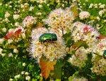 Какие есть виды полевых цветов: разновидности растений 81