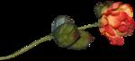 «Fruits_Village_by»  0_8b32d_491fb1f4_S