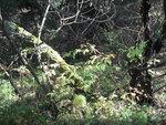 Сельва на границе поймы и леса