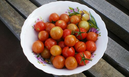 Как выбрать и правильно посадить помидоры