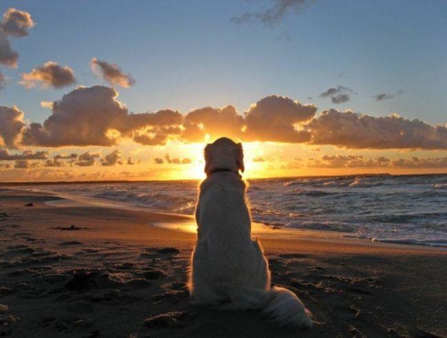 Собака любуется летним закатом прикольные фото