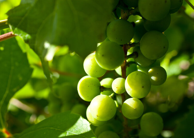 Виноградное