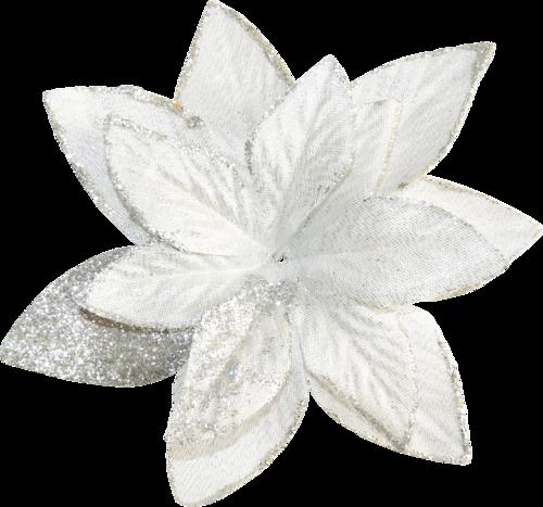 полуночный цветок