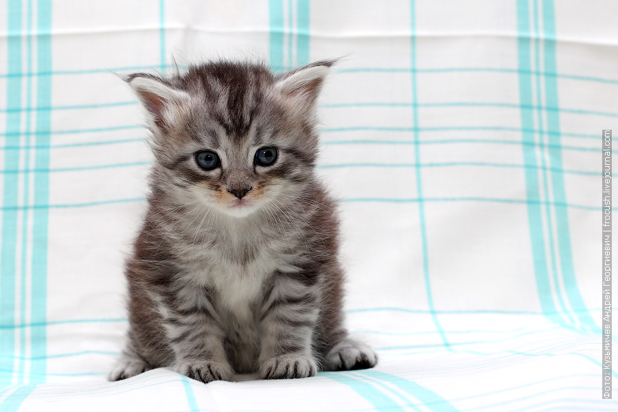котенок фото